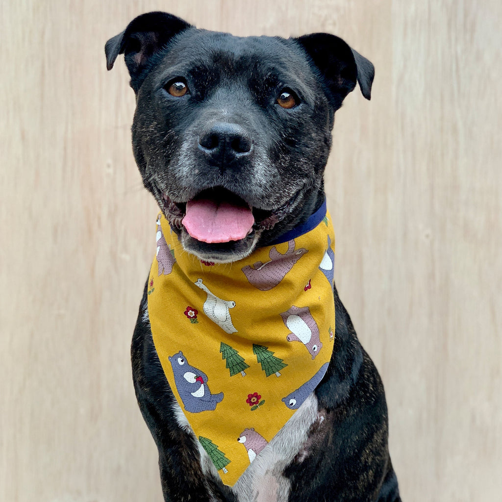 Beary Good - Bandana - The Sophisticated Pet