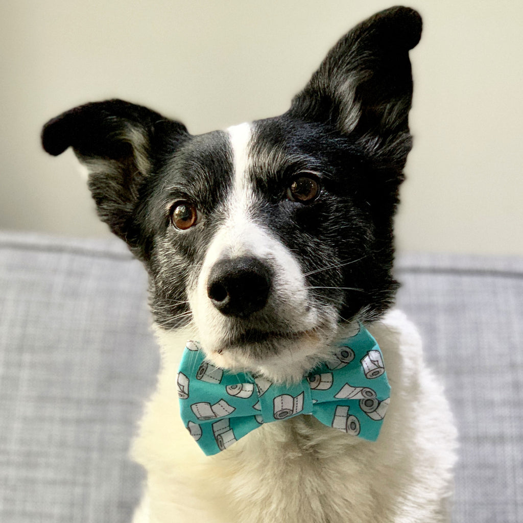 Dunny Roll - Bow Tie - The Sophisticated Pet