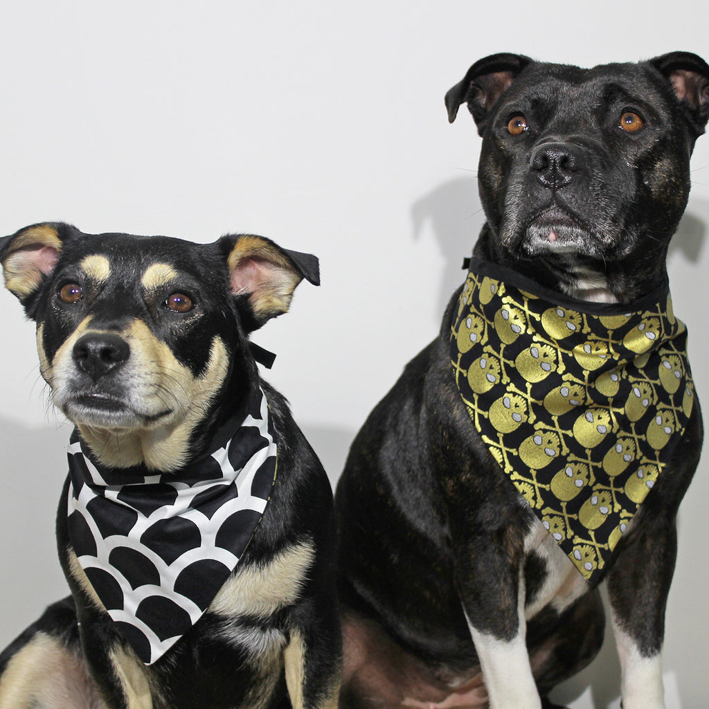 Gold Digger - Bandana - The Sophisticated Pet