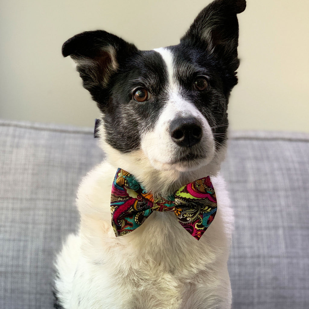 Fantasy - Bow Tie - The Sophisticated Pet