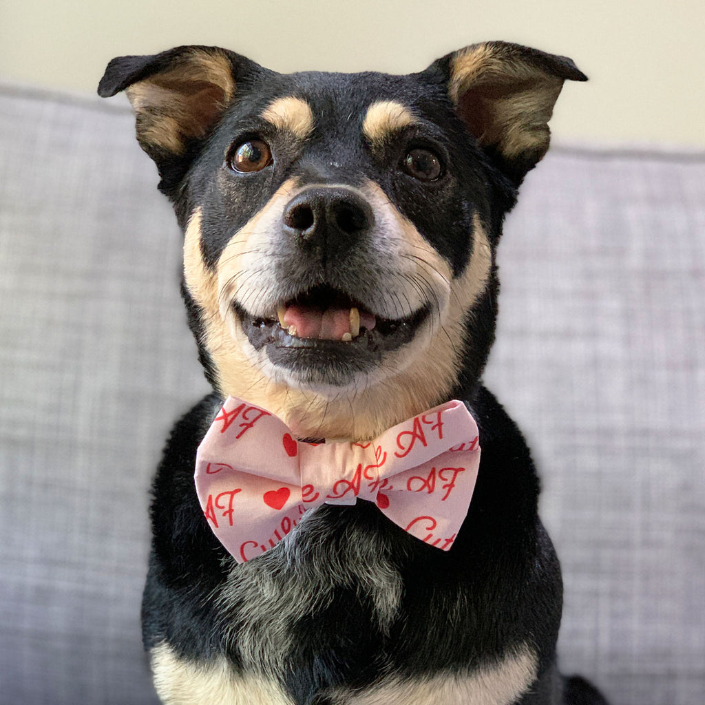 Cute A-F - Bow Tie - The Sophisticated Pet