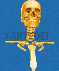 Product image of ARTIST-FRANZISKA-SLAVIK, SERIES-SKELETON