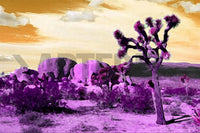 Product image of ARTIST-CHRISTIAN-TREBOR, COLLECTION-AMERICAN-LANDSCAPES, SERIES-DESERT-CACTUS