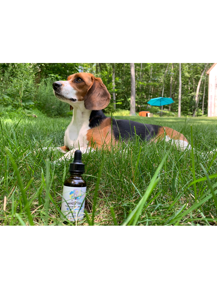 CBD Oil Tincture for Pets 225 - 900 MG