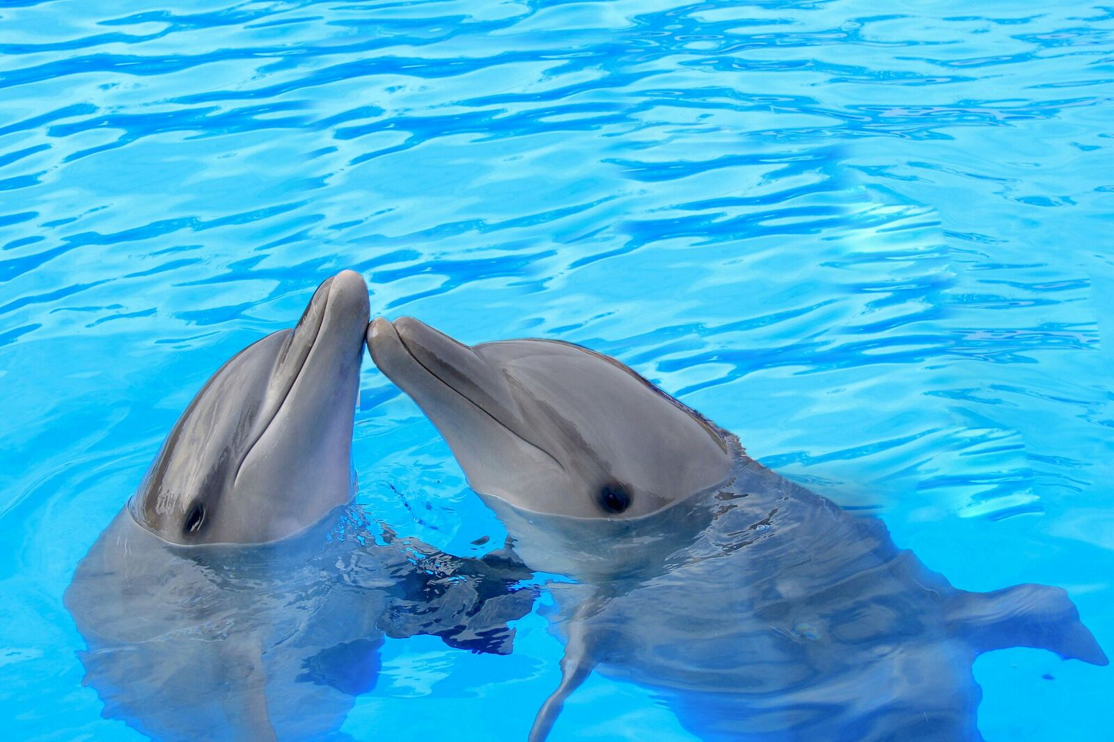 Sharing is caring. Dolphins hanging in the water.