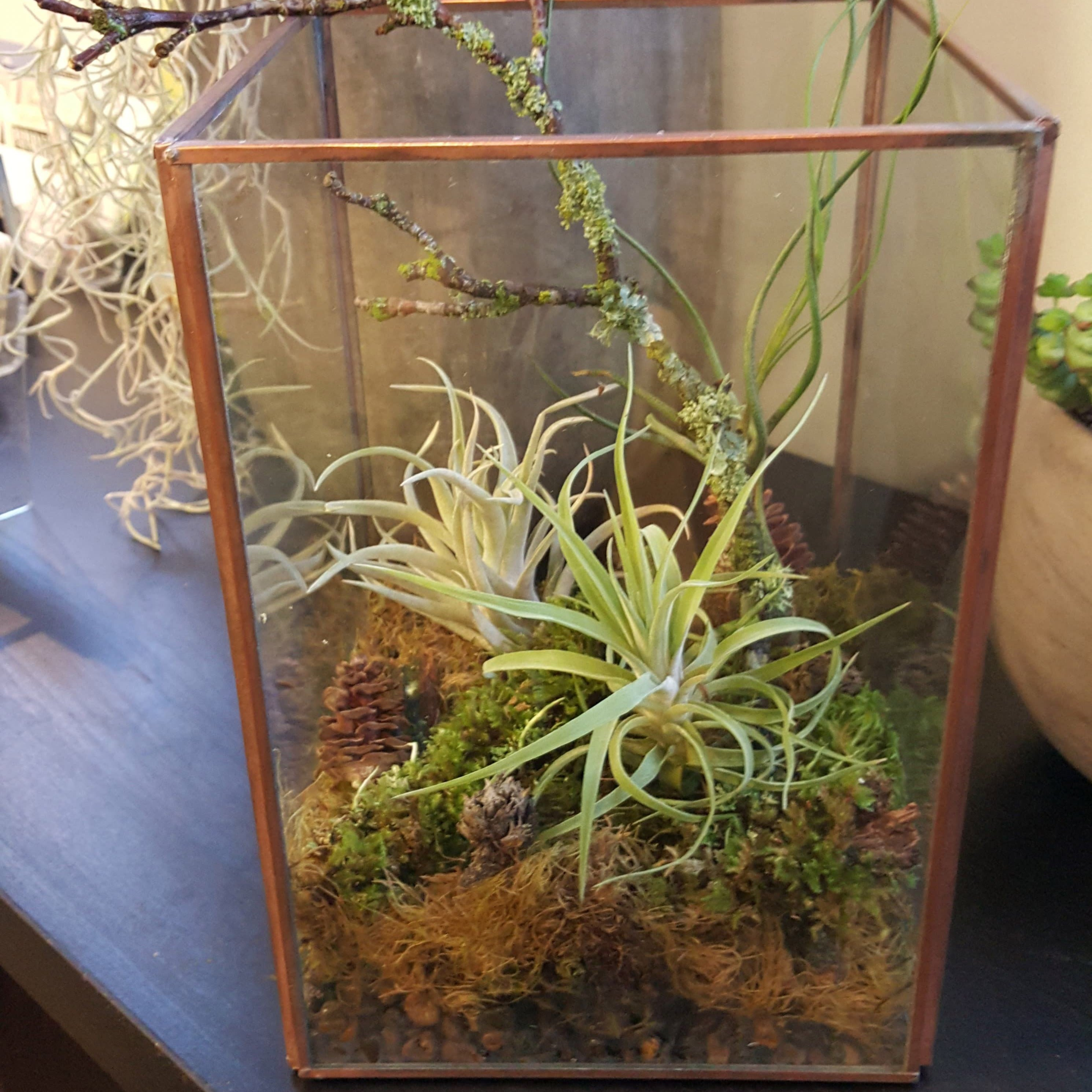 Air Plant Terrarium Daily Floral Delivery In Portland Or
