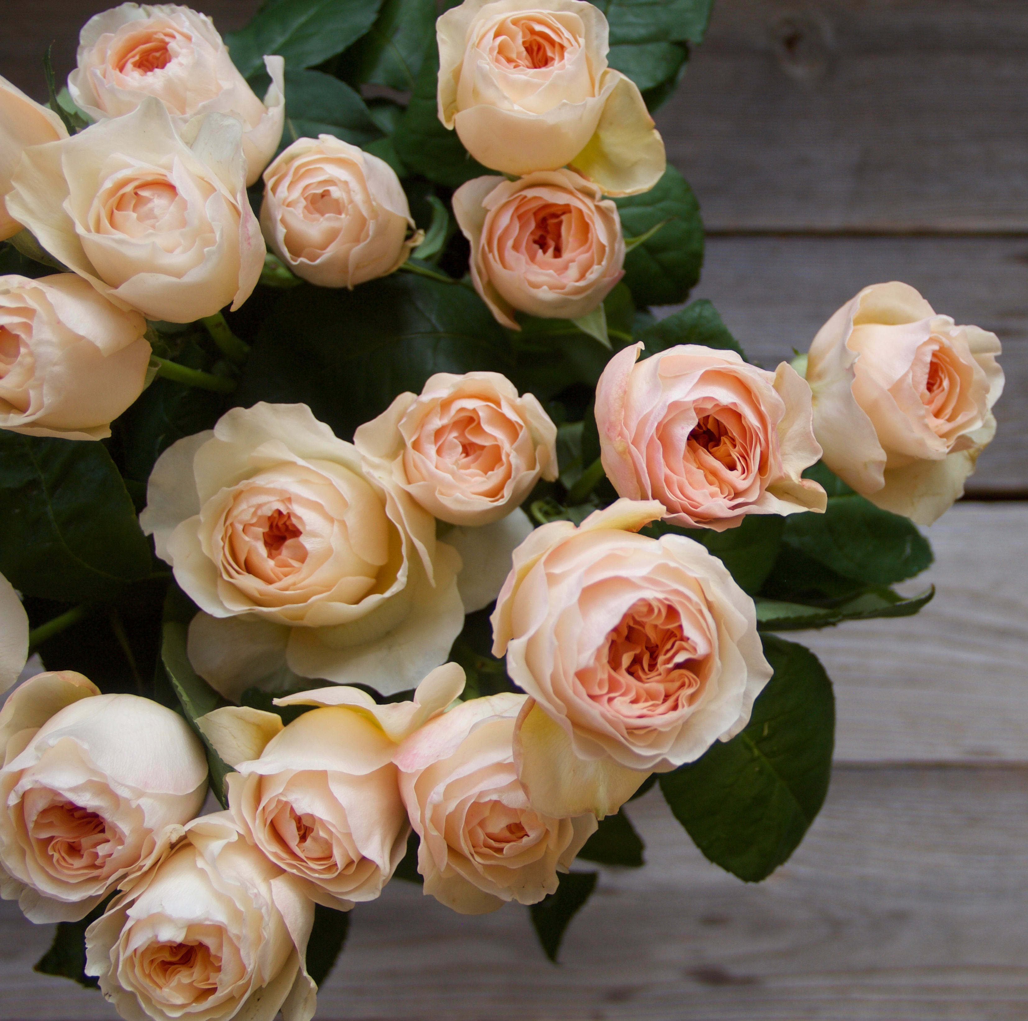 12 Garden Roses - Daily floral delivery from Botanica Floral Design