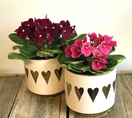 African Violet - Daily floral delivery from Botanica Floral Design