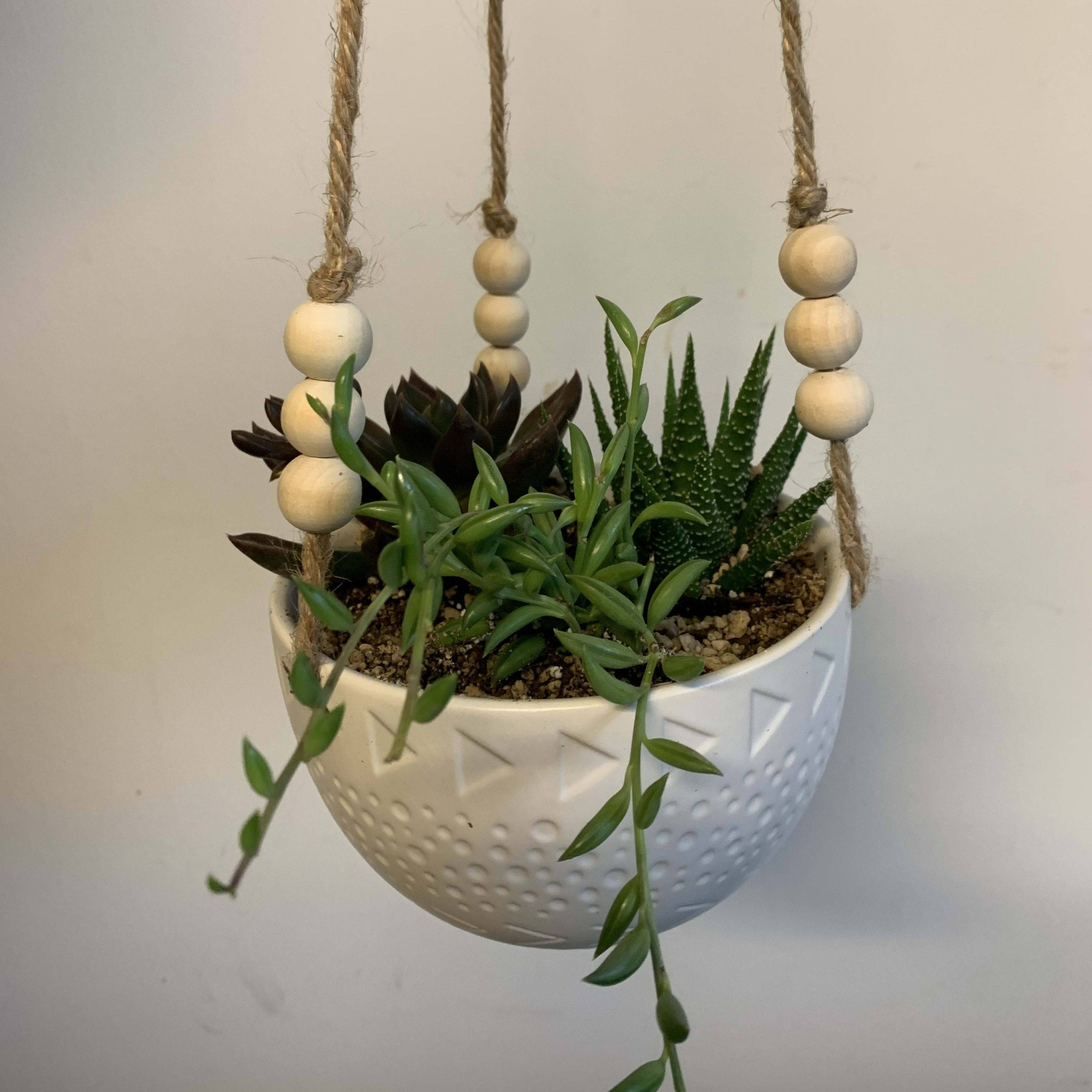 Hanging Succulent Bowl - Daily floral delivery from Botanica Floral Design