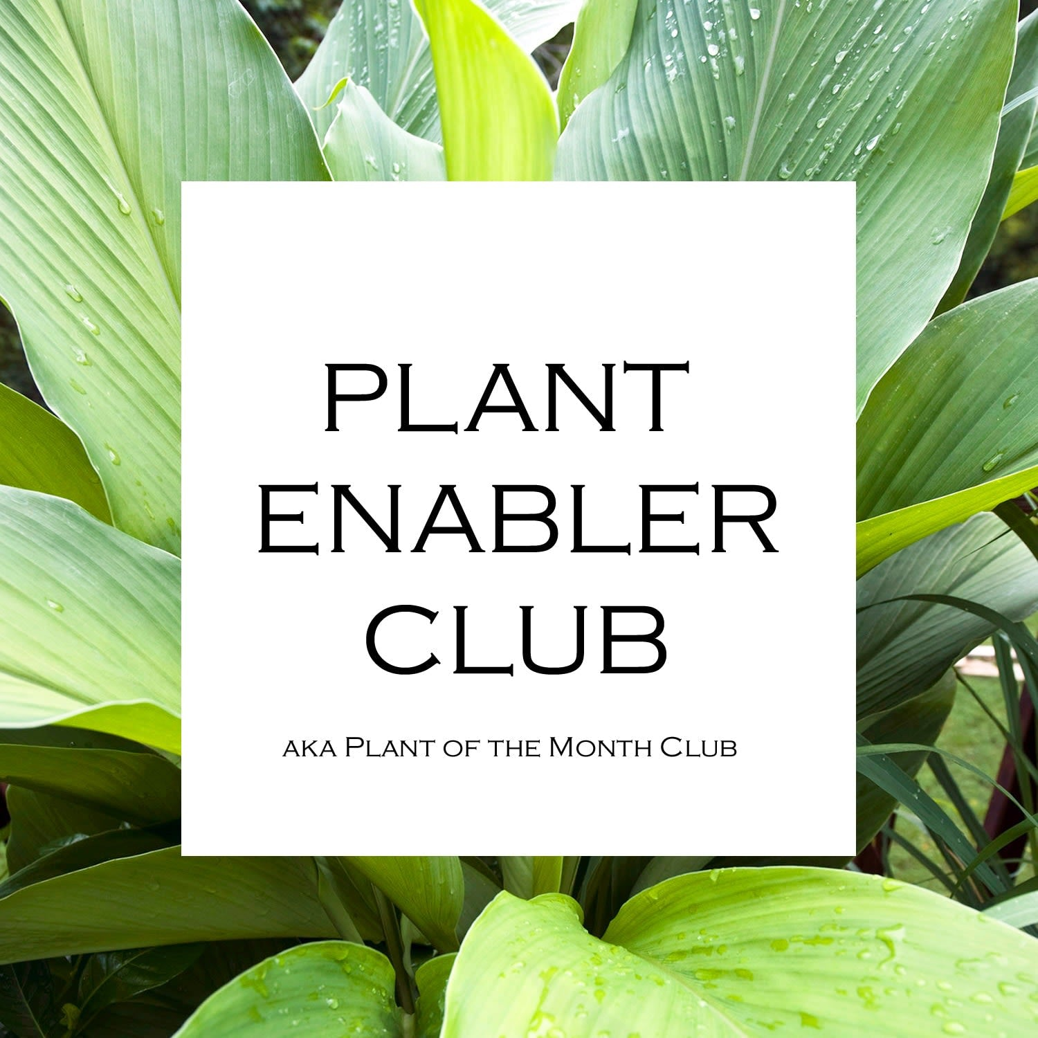 Plant Enabler Club - Daily floral delivery from Botanica Floral Design
