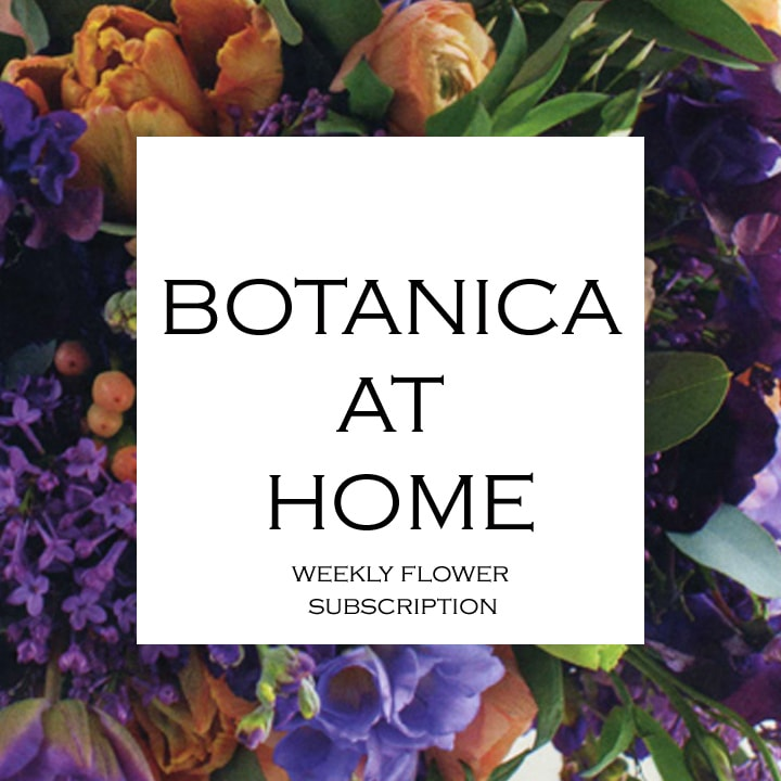 Botanica at Home - Daily floral delivery from Botanica Floral Design