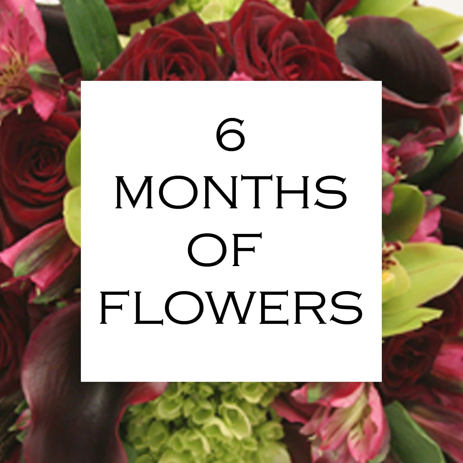 6 Months of Flowers - Daily floral delivery from Botanica Floral Design