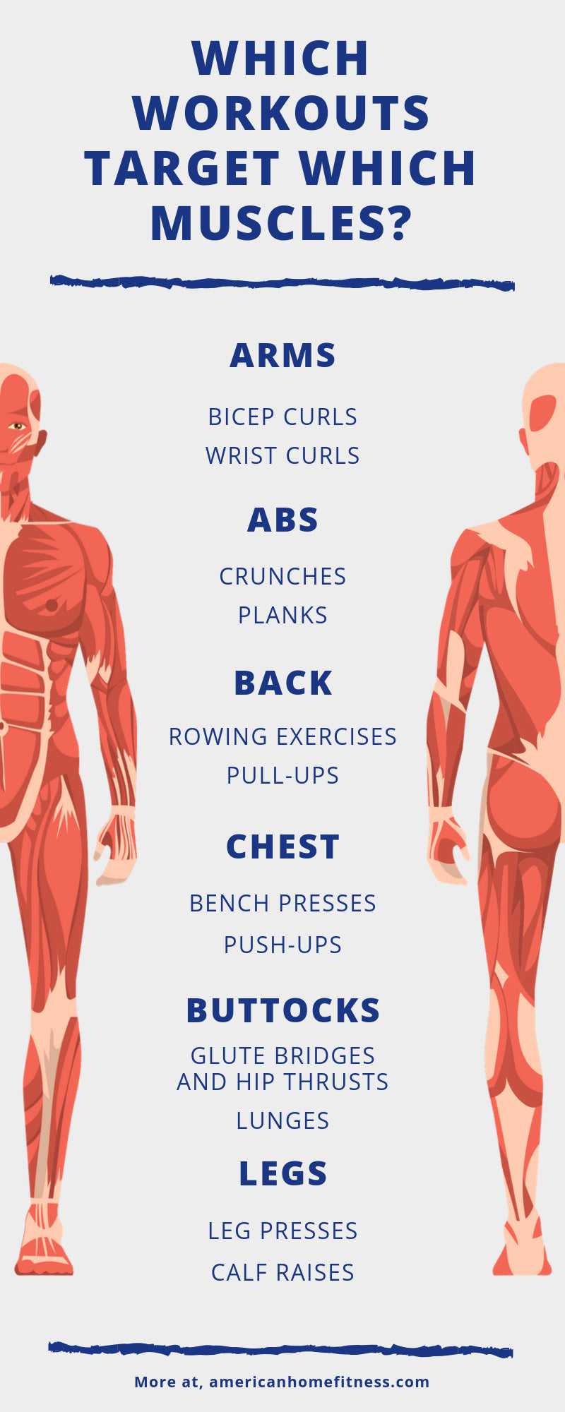 Which Workouts Target Which Muscles infographic