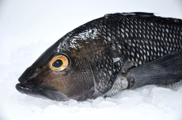 black sea bass massachusetts on ice