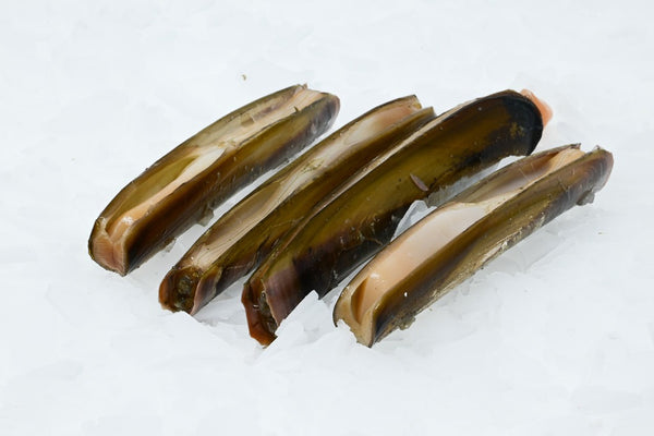 razor clams on ice