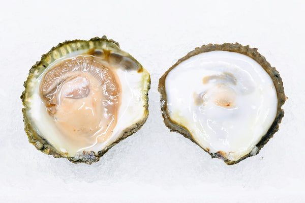 Belon Oysters (Maine) - 10pc