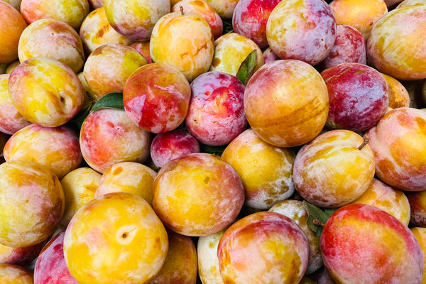 October Sun Pluots (K&J Orchards) - 2lb