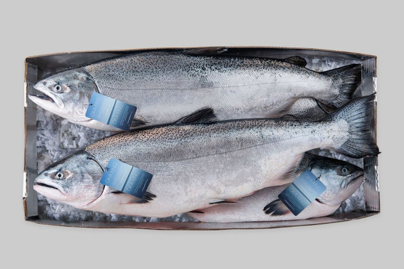Ora King Salmon - Whole ~10lb