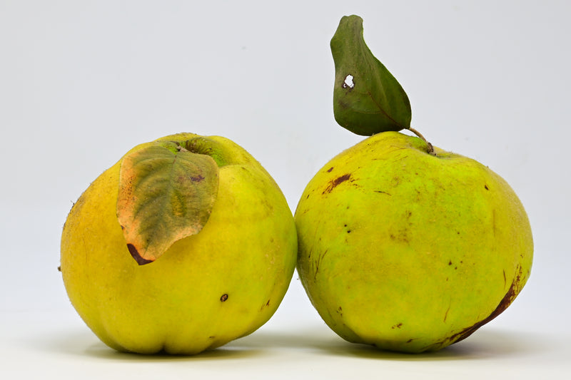 Quince (Arata Farms) - 2ea