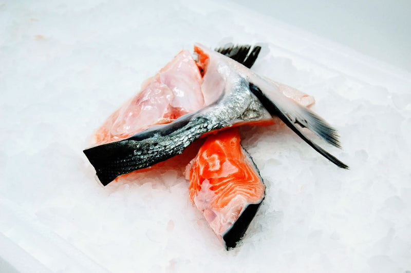 salmon collars on ice