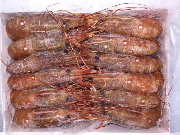 Canadian Spot Prawns (Head On) - 2.2lb