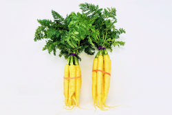 two organic Yellow Carrot Bunches