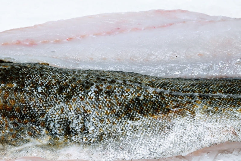 atlantic cod fillet on ice