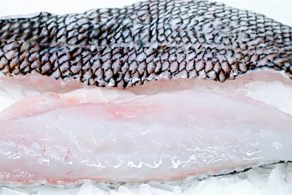black sea bass fillets on ice