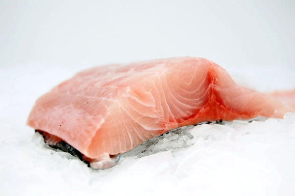 kampachi fillet on ice