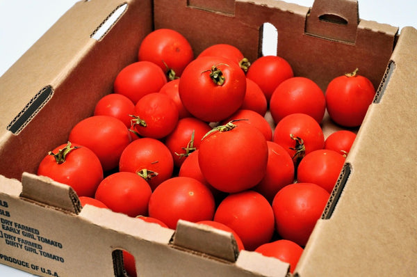 Early Girl Tomato Box- 5 lb