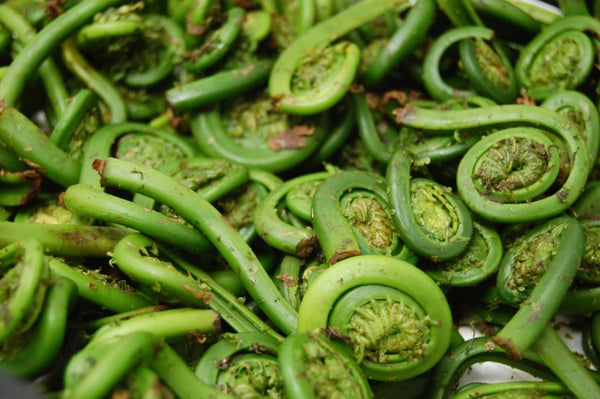 green fiddlehead ferns in a pile