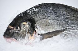 pristine whole sea bream dorade on ice