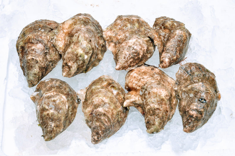 Standish Shore Oysters - 10pc