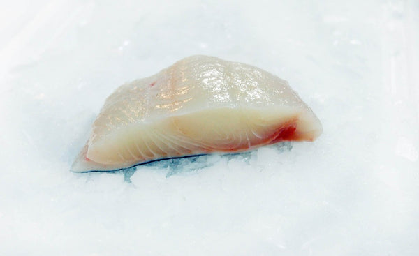 fresh norwegian halibut fillet on ice four star seafood