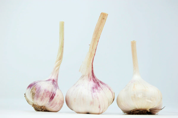 Fresh Garlic (uncured)- 3 heads