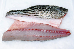 true striped bass fillet four star seafood