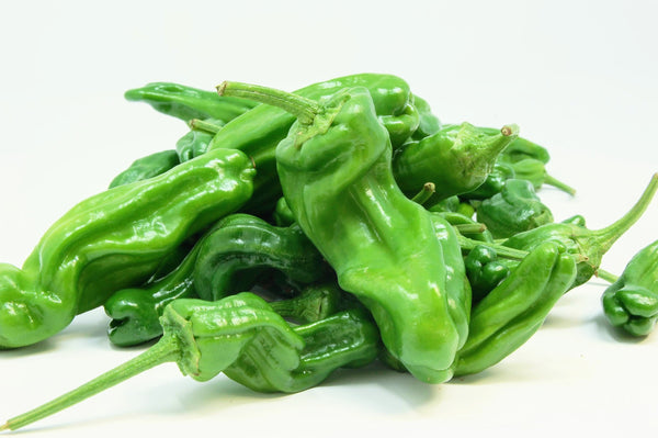 Shishito Peppers (Riverdog Farm) - 0.5lb