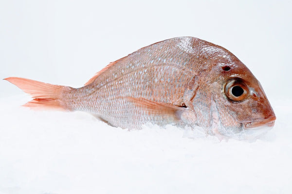 thai snapper red sea bream on ice