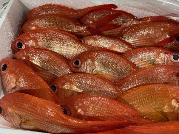 Red Snapper (NZ) 2lb each