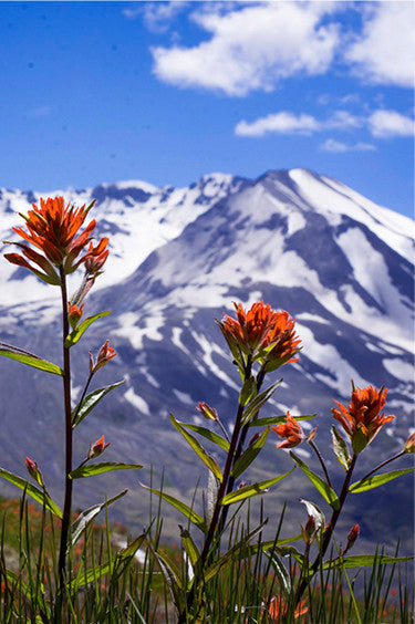 Flowers with Mountains