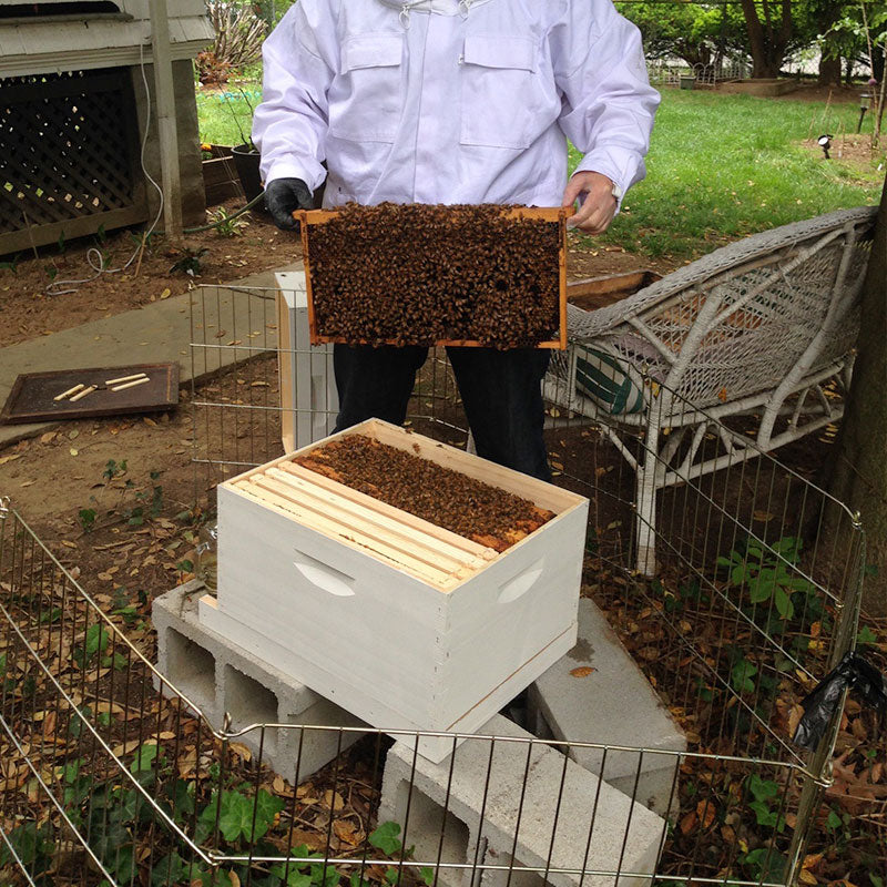 Honey Bee Hive Adoption (NON-CBD PRODUCTS)