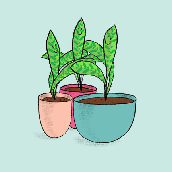 Huddle houseplants together for warmth and humidity