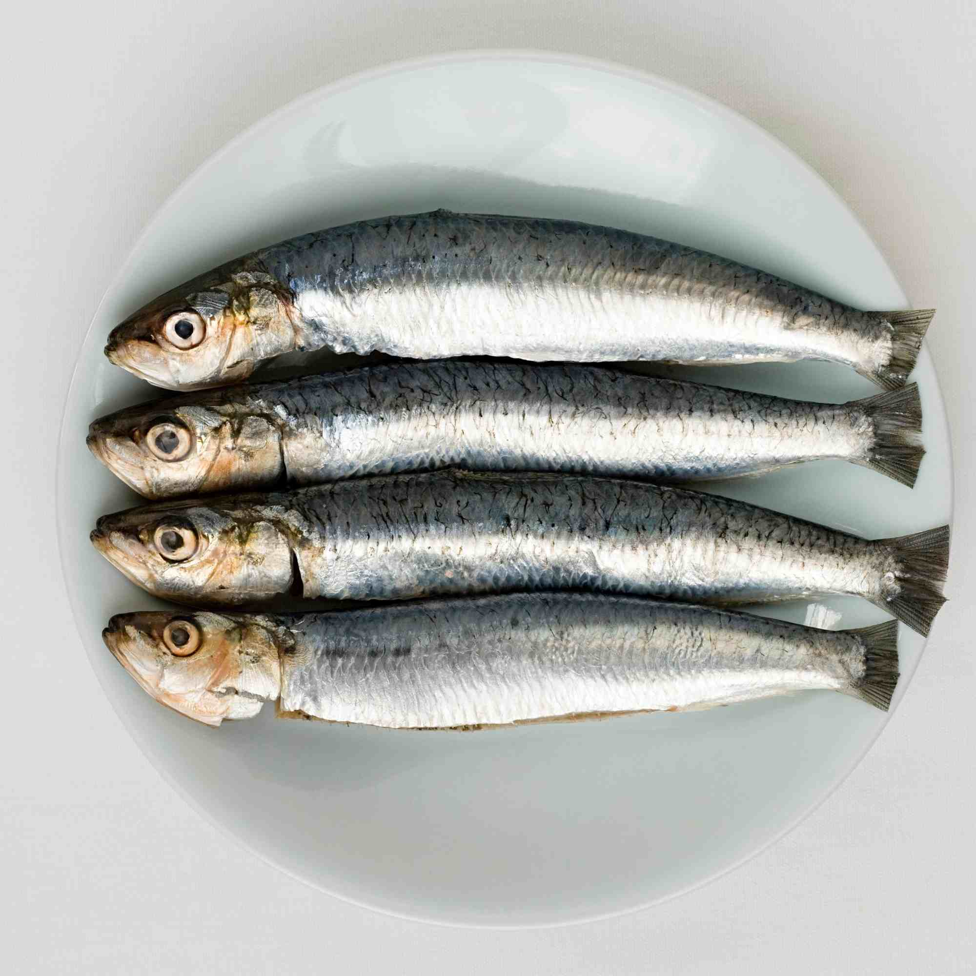 Sardines (Port Lincoln) Per Kg