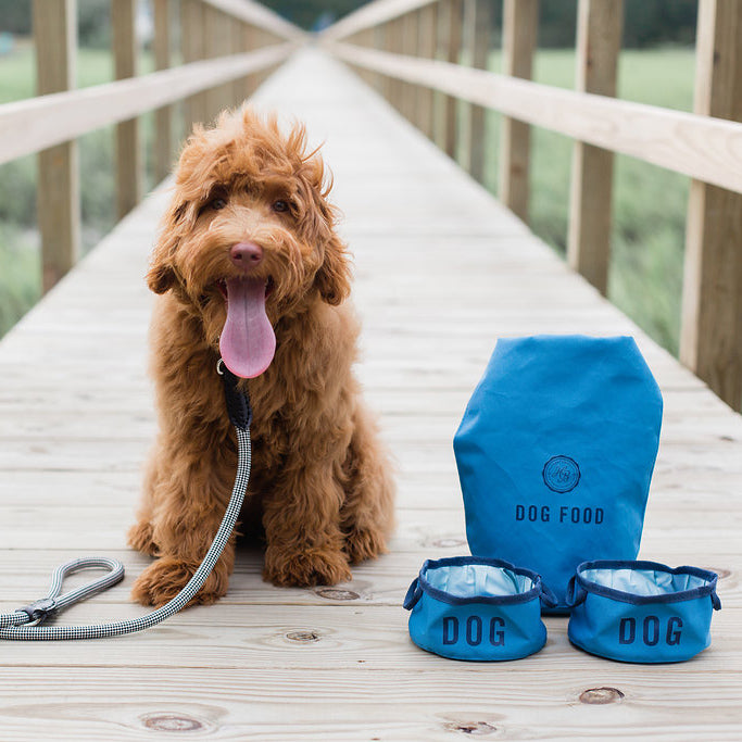 Dog sitting with pet products on a bridge
