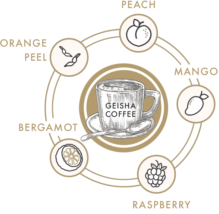 Geisha Coffee flavor