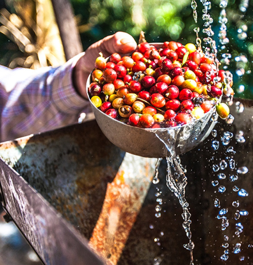 New to Specialty Coffee?                     Here's a Must-Read for You.