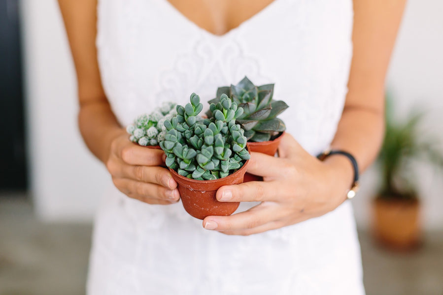 Signs of an Un-Healthy Succulent and How to Revive