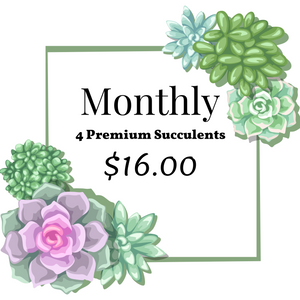 4 pack of Succulents Monthly Subscription