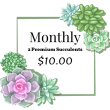 Load image into Gallery viewer, 2 pack of Succulents Monthly Subscription