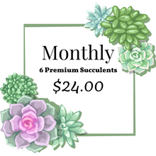 Load image into Gallery viewer, 6 pack of Succulents Monthly Subscription